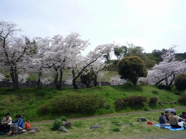 P1040096 狩野川さくら公園.jpg