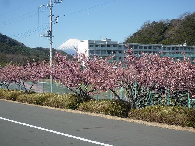P1040687 河津桜.jpg